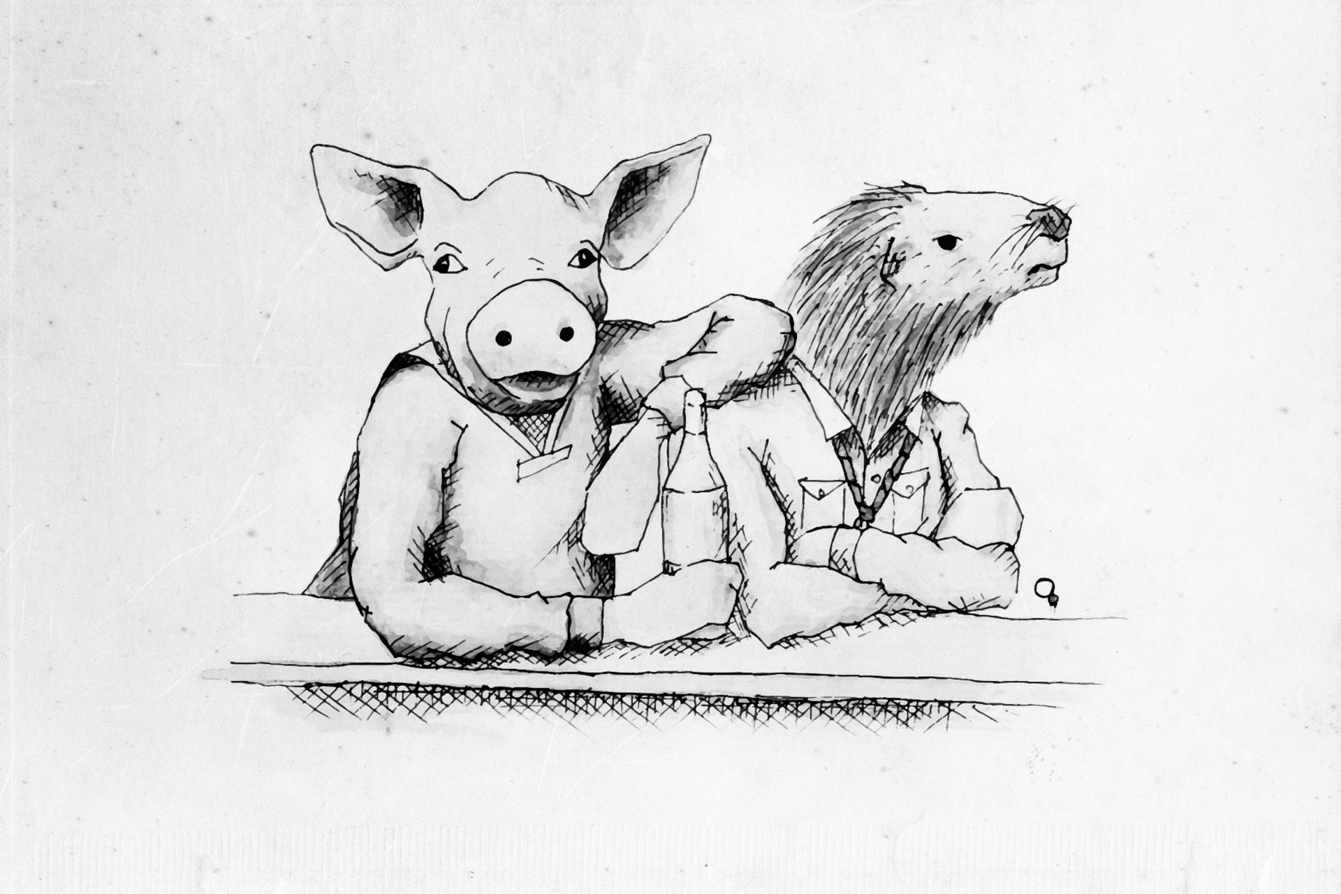 Schwein.indd